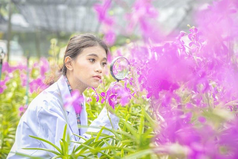 Os cientistas do sorriso guardam as lentes de aumento, felizes com sucesso Da orquídea botânica da pesquisa do pesquisador camisa foto de stock