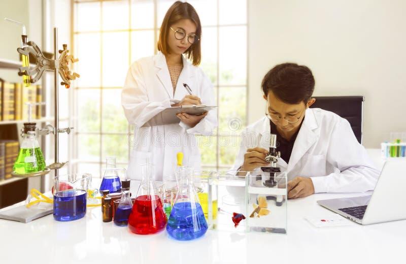 Os cientistas ou o pesquisador asiático são estudo e pesquisa com Siame imagem de stock