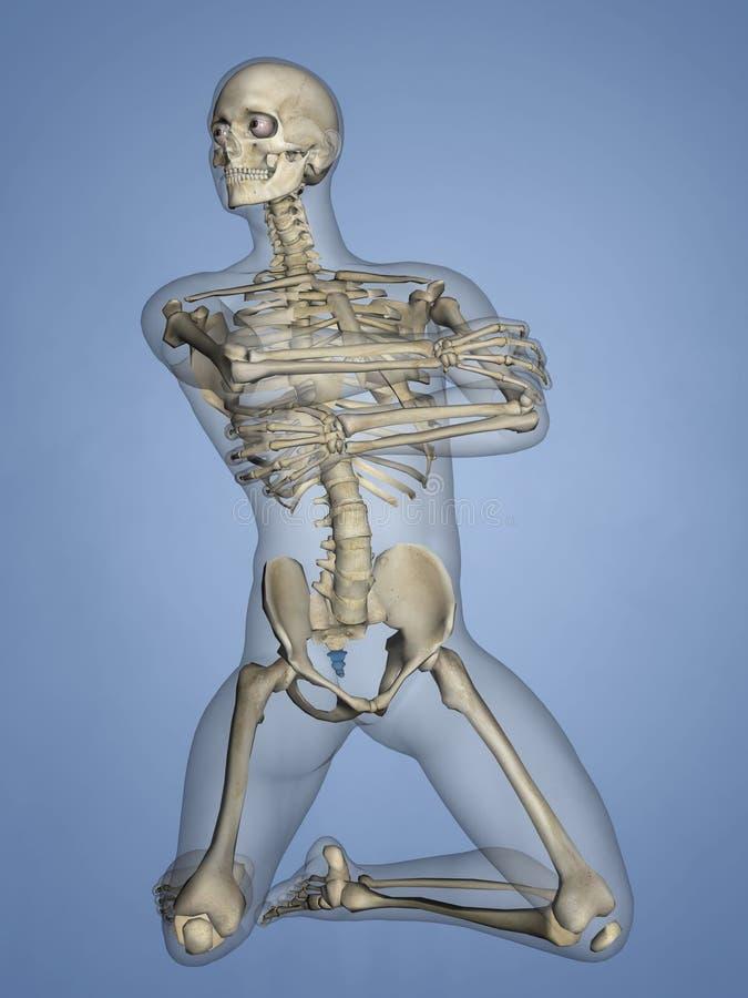 Os coccygis, 3D model royalty ilustracja