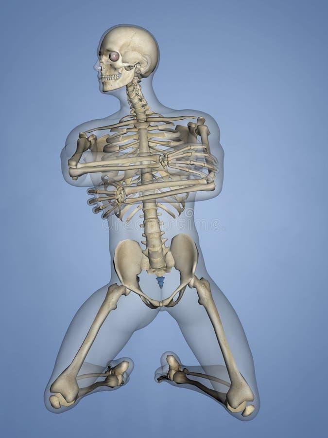 Os coccygis, 3D model ilustracja wektor