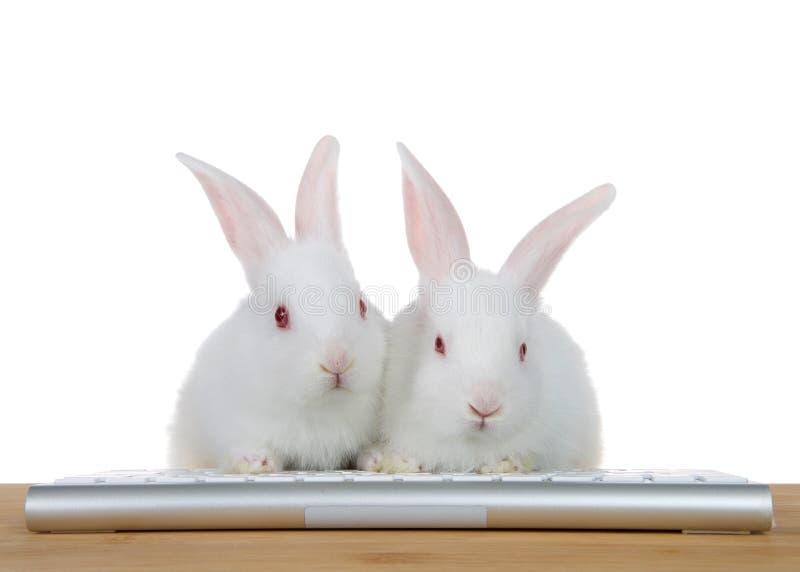 Os coelhos esclarecidos do beb? do computador isolaram-se fotografia de stock royalty free