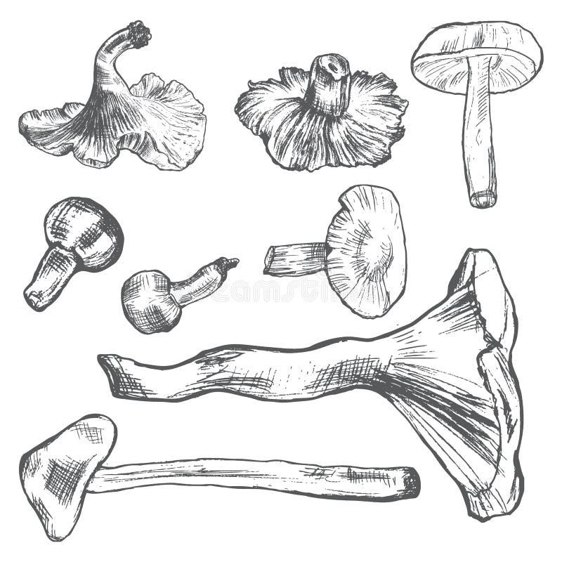 Os cogumelos entregam o vegetal tirado do esboço do vetor no branco, ilustração stock