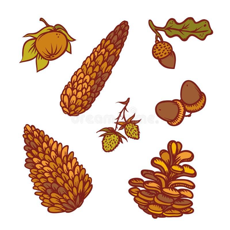 Os cones e as bolotas do pinho do outono ajustaram outonal isolado colorido do esboço sazonal da ilustração do esboço do vetor da ilustração royalty free