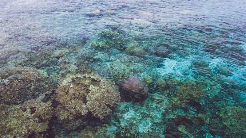 Os corais coloridos bonitos visíveis no oceano claro transparente molham perto da ilha de Mansuar em Raja Ampat Papua ocidental imagens de stock