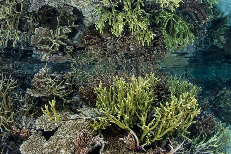 Os corais rasos espelharam na água calma em Raja Ampat fotos de stock royalty free