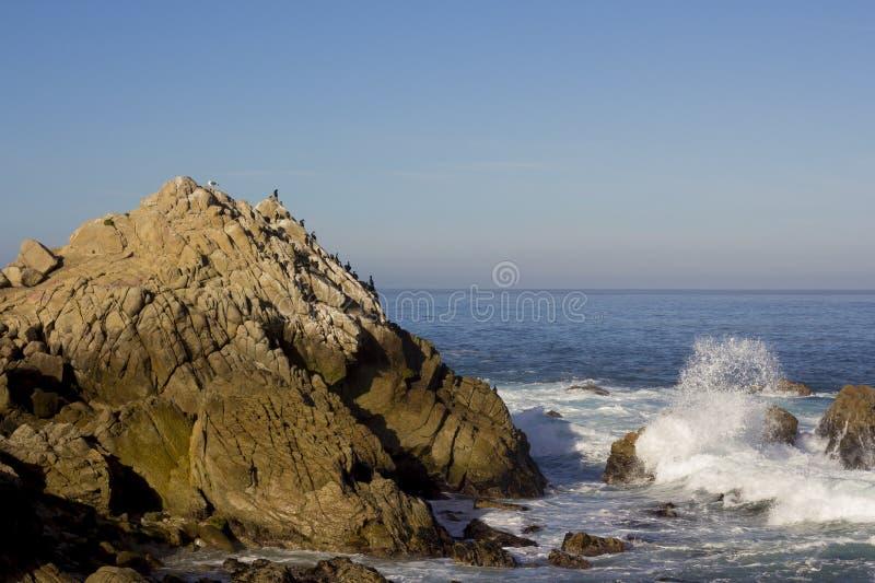 Os cormorões de Brandt em uma rocha, movimentação de 17 milhas fotos de stock
