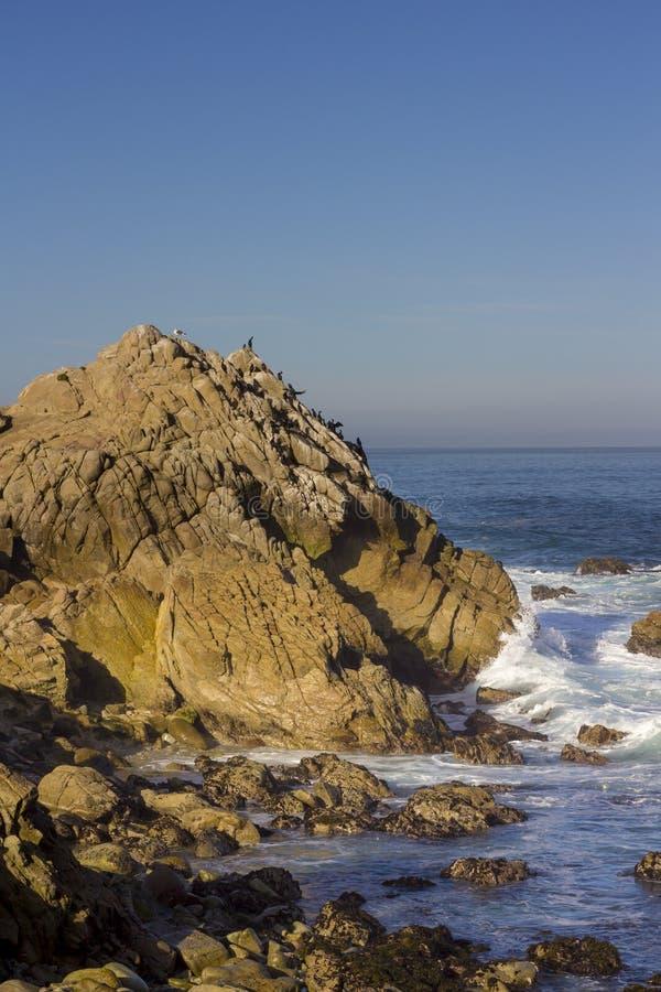 Os cormorões de Brandt em uma rocha, movimentação de 17 milhas imagem de stock