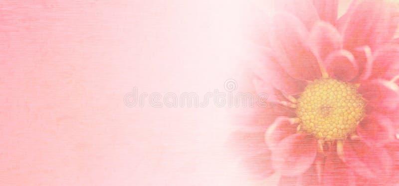 Os crisântemos cor-de-rosa doces florescem no estilo macio e borrado com textura do papel da amoreira foto de stock royalty free