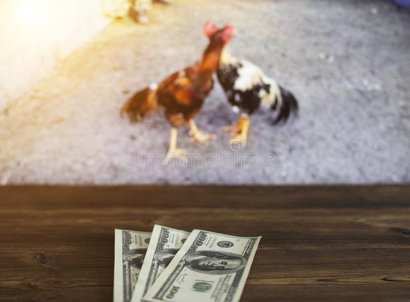 Os dólares do dinheiro no fundo de uma tevê em que são mostrados brigas de galos, ostentam apostas, dólares fotos de stock