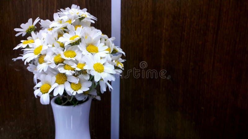 Os daisys brancos foto de stock