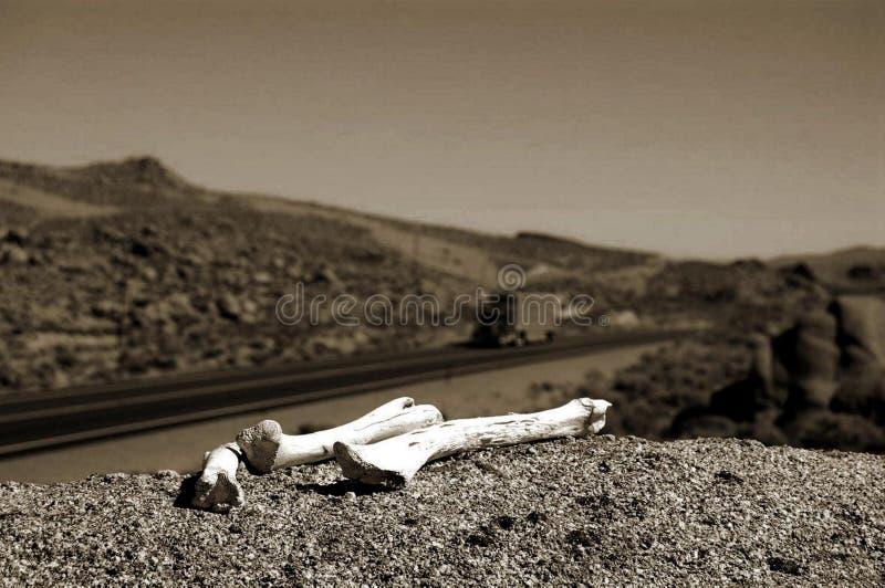 Os de désert photo libre de droits