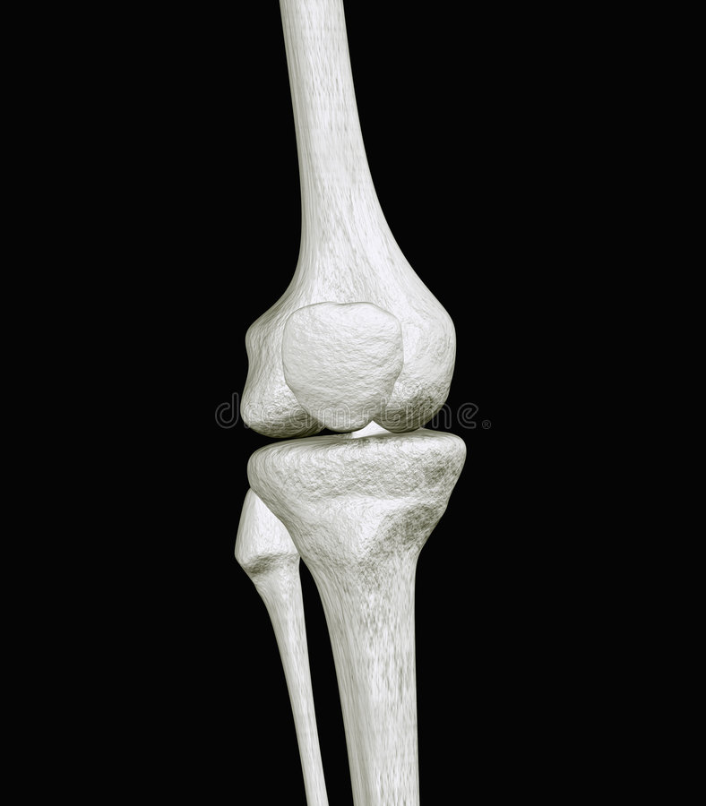 Os de genou illustration de vecteur