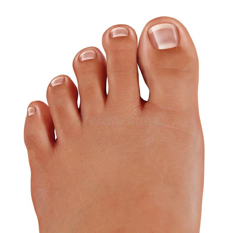 Os dedos do pé saudáveis fecham-se acima fotos de stock