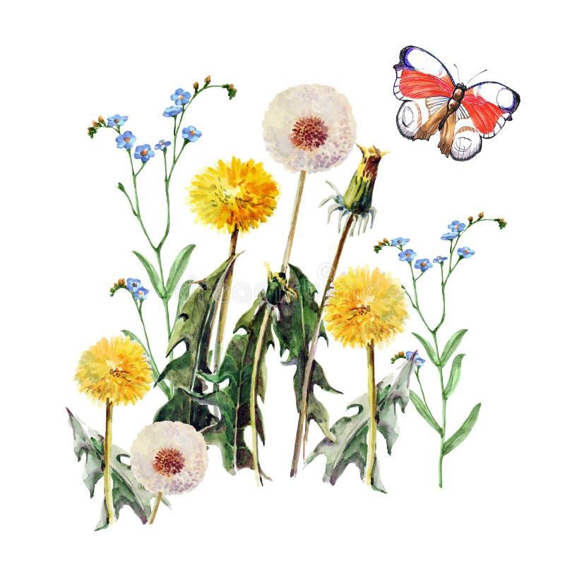 Os dentes-de-leão, prado florescem, borboleta, aquarela, teste padrão ilustração stock