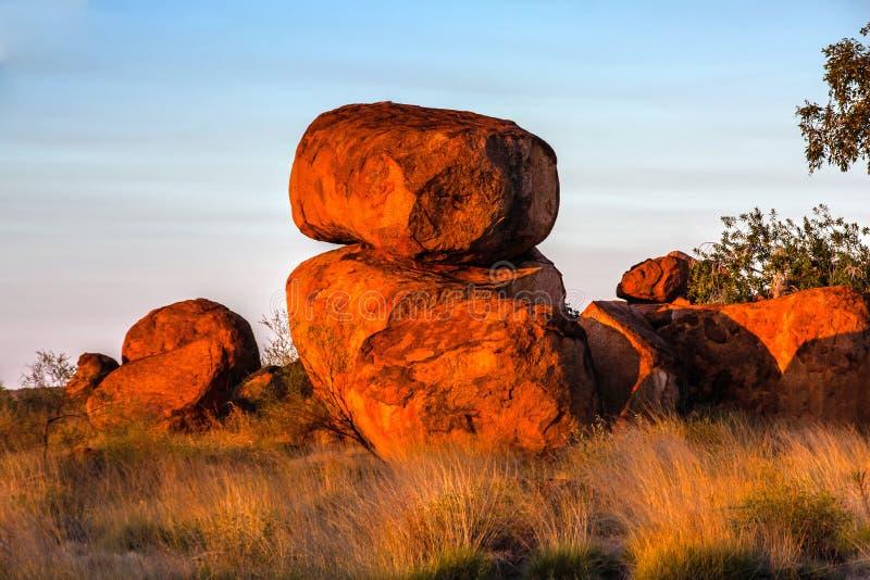 Os diabos marmoreiam a reserva da conservação no por do sol foto de stock royalty free
