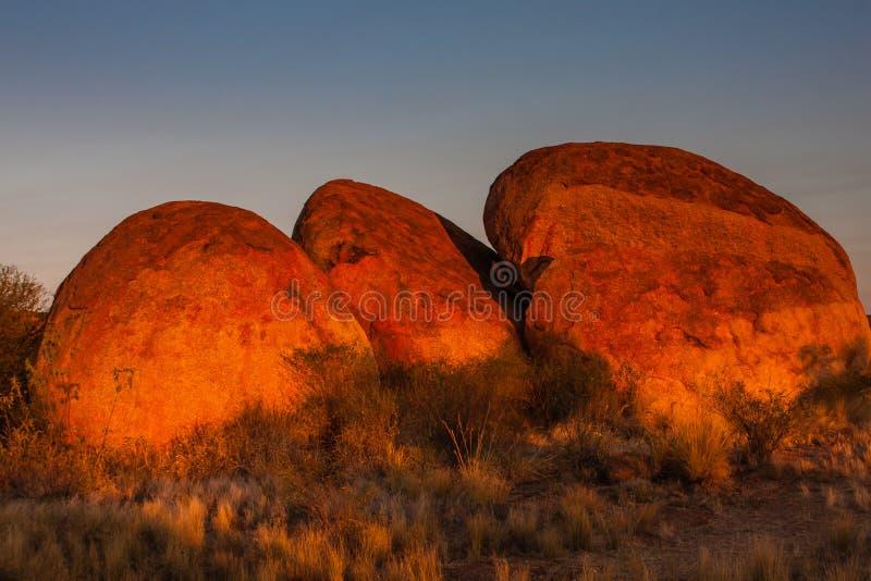 Os diabos marmoreiam a reserva da conservação no por do sol imagens de stock