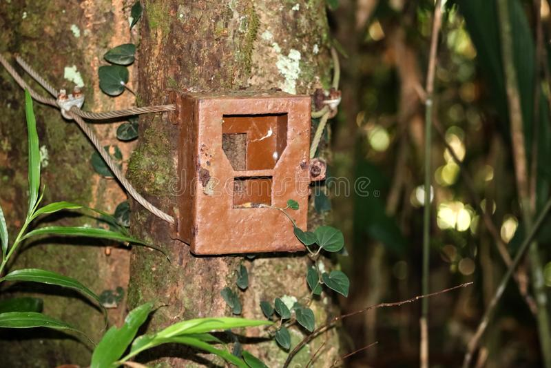Os diplomatas idosos da caixa ou da caixa da armadilha da câmera a uma árvore para capturar vão faz4e-lo fotos de stock royalty free