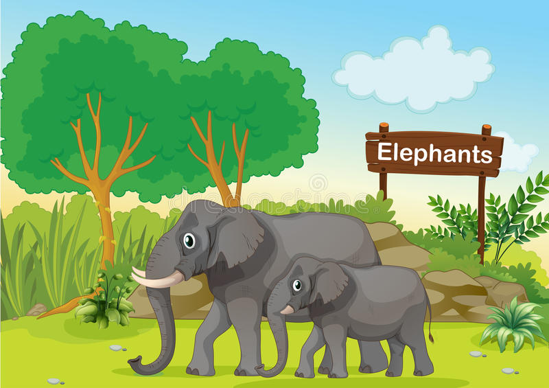 Os dois elefantes cinzentos perto de um signage de madeira ilustração royalty free