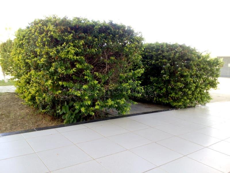 Os dois pares de plantas da universidade foto de stock