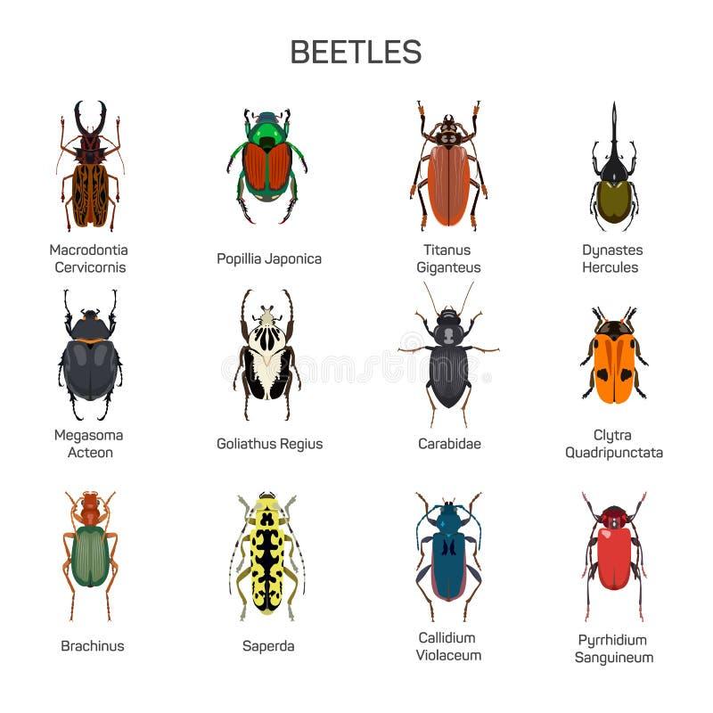 Os erros vector o grupo no projeto liso do estilo Tipo diferente da coleção dos ícones da espécie do inseto dos besouros ilustração stock