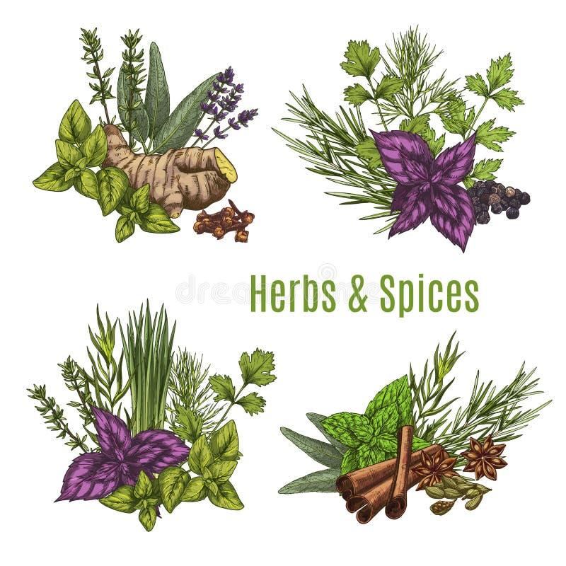 Os esboços frescos da erva e da especiaria para o alimento projetam ilustração royalty free