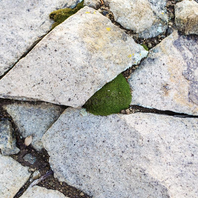 Os estilhaços brancos da rocha do tufo fazem um projeto em torno de uma bolha pequena do musgo verde imagem de stock royalty free