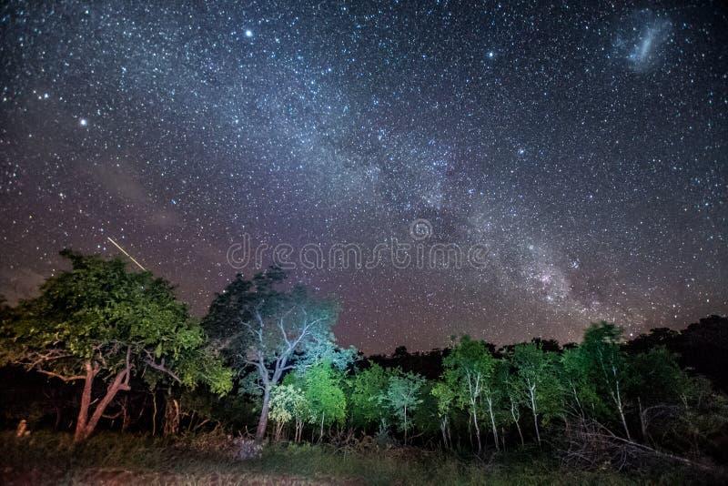 Os estiramentos de Milkyway através do céu sobre o arbusto africano na reserva do jogo de Umkhuze foto de stock royalty free