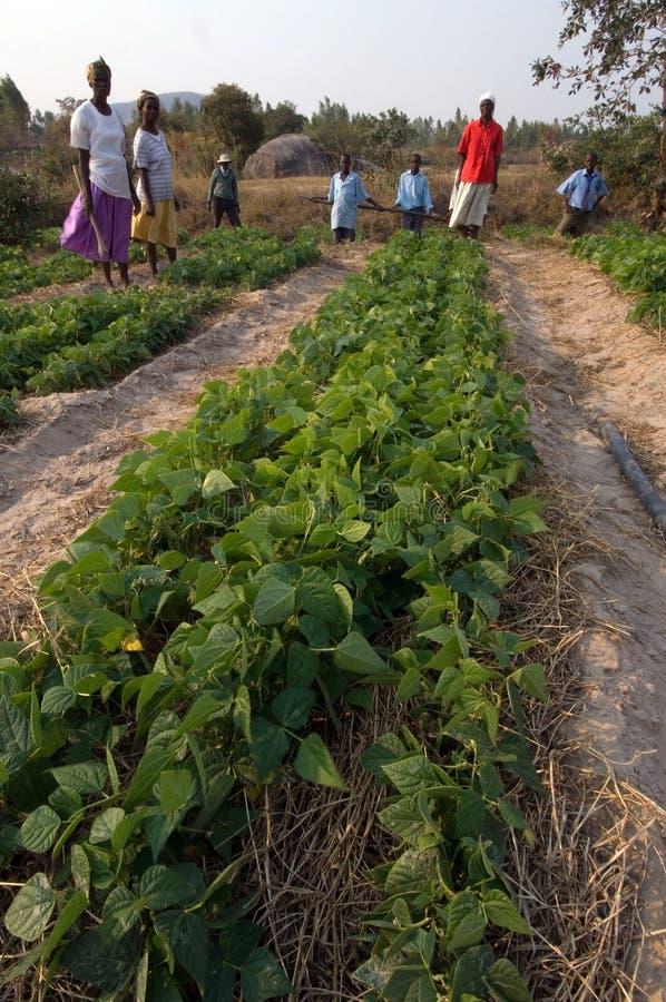 Os fazendeiros agrupam em Zimbabwe imagens de stock royalty free