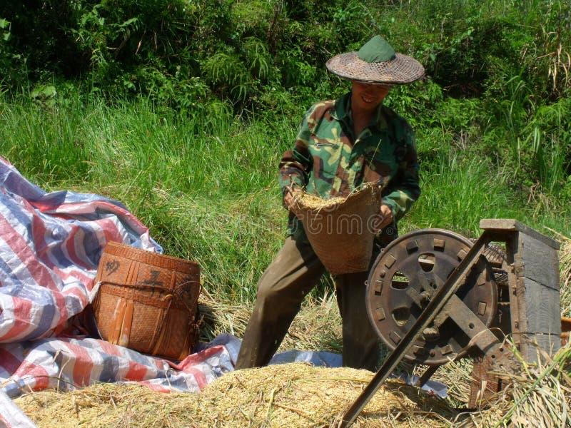 Os fazendeiros estão trabalhando foto de stock royalty free