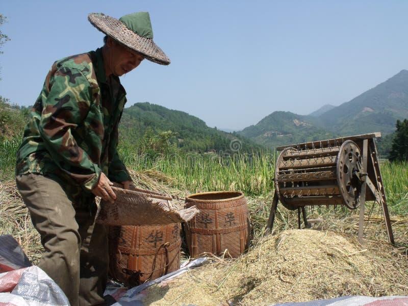 Os fazendeiros estão trabalhando fotografia de stock