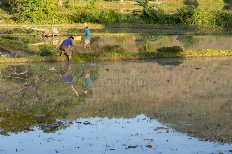 Os fazendeiros no trabalho em um arroz colocam, Mae Hong Son Thailand 20 01 201 fotos de stock royalty free