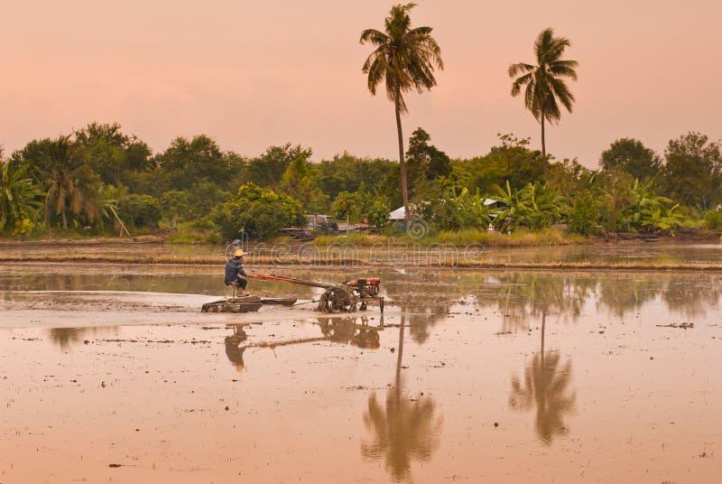 Os fazendeiros tailandeses que trabalham com um arado handheld do motor em um arroz colocam foto de stock