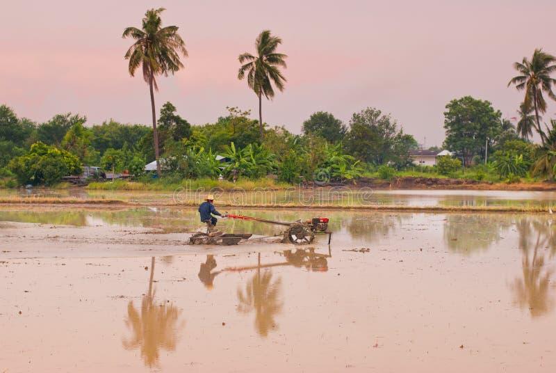 Os fazendeiros tailandeses que trabalham com um arado handheld do motor em um arroz colocam imagem de stock