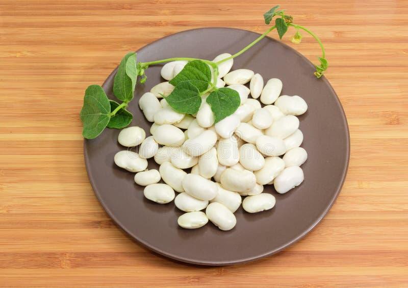 Os feijões brancos crus no prato marrom com feijão provêm imagens de stock