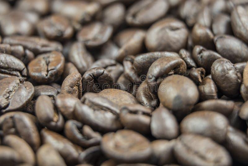 Os feijões de café frescos fecham-se acima imagens de stock royalty free