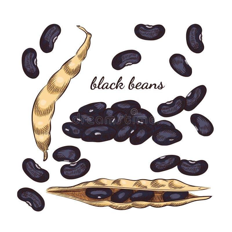 Os feijões pretos entregam o esboço tirado no fundo branco ilustração stock