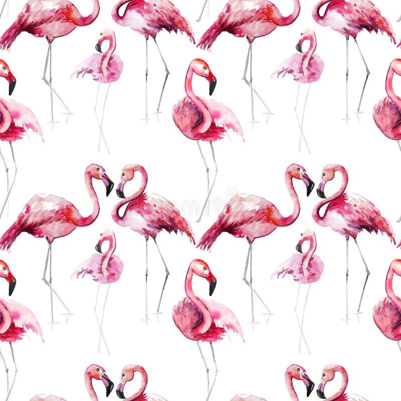 Os flamingos selvagens animais tropicais maravilhosos sofisticados delicados macios bonitos brilhantes do rosa da praia do verão  ilustração royalty free