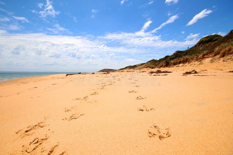 Os footpirnts do pássaro na praia de Flynns do th foto de stock