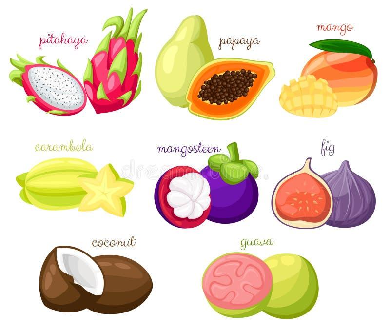 Os frutos exóticos ajustaram o isolado orgânico dos desenhos animados suculentos e maduros do carambola do coco do figo do mangus ilustração royalty free