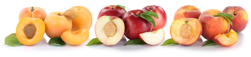 Os frutos frescos do meio fruto da fatia do abricó da nectarina do pêssego isolaram o fotos de stock royalty free