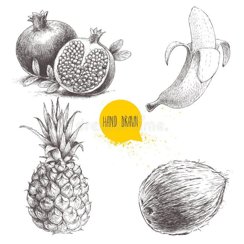 Os frutos tropicais tirados mão do estilo do esboço ajustaram-se isolado no fundo branco Banana, coco, abacaxi e romã com semente ilustração royalty free
