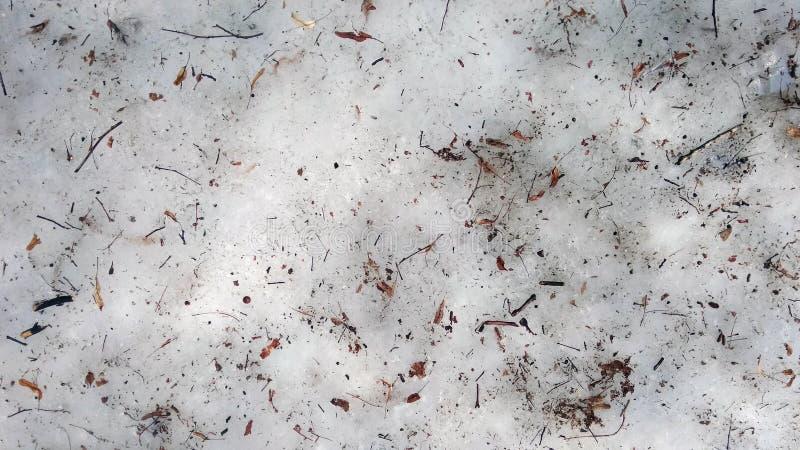 Os galhos e secam as folhas no assoalho da floresta A neve está derretendo Th fotografia de stock