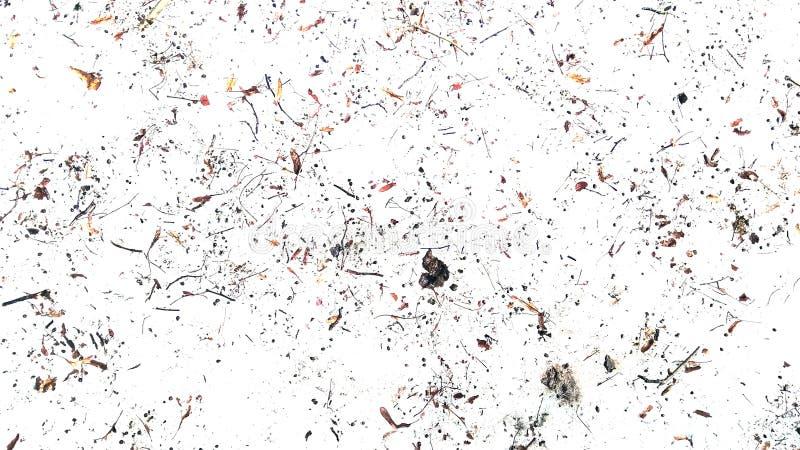 Os galhos e secam as folhas no fundo branco Sumário foto de stock royalty free