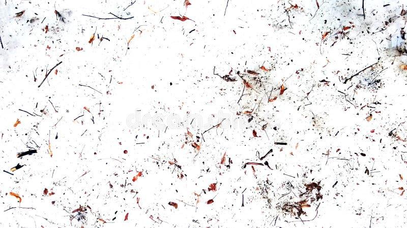 Os galhos e secam as folhas no fundo branco Sumário imagem de stock