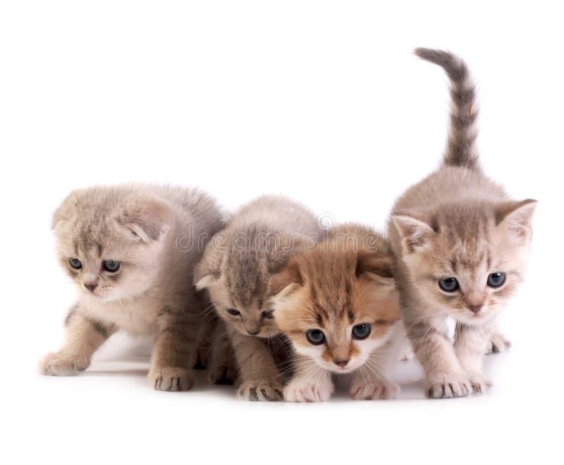Os gatinhos imagens de stock royalty free