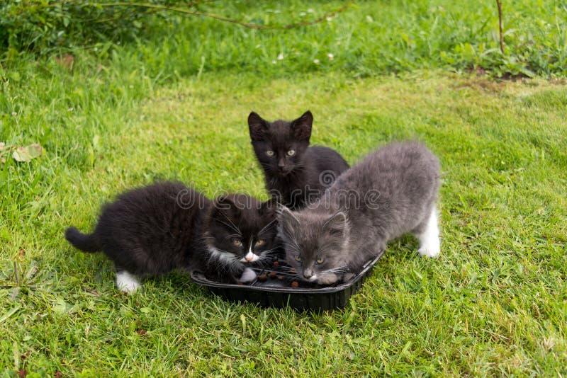 Os gatinhos novos comem fotografia de stock