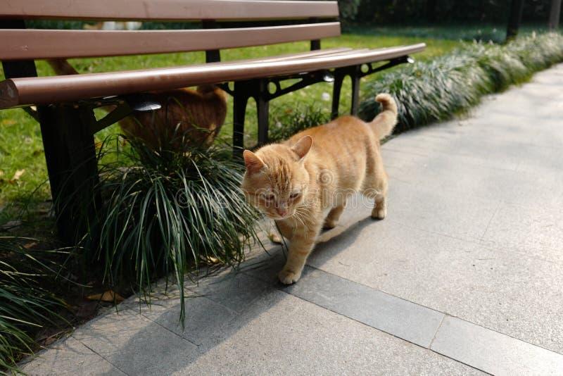 os gatos de passeio imagens de stock royalty free