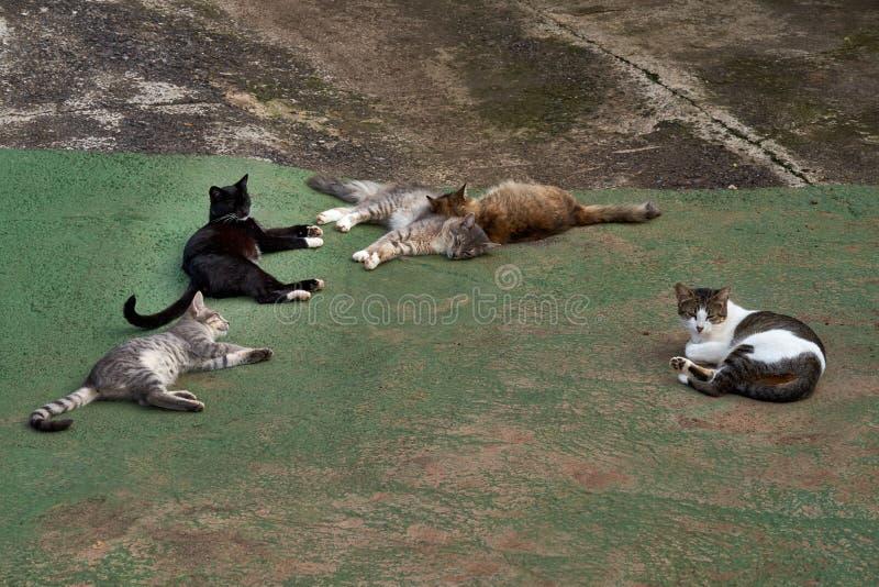 Os gatos desabrigados são aquecidos no sol foto de stock