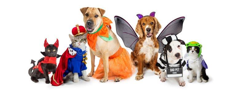 Os gatos e os cães em Dia das Bruxas trajam a bandeira da Web imagem de stock royalty free
