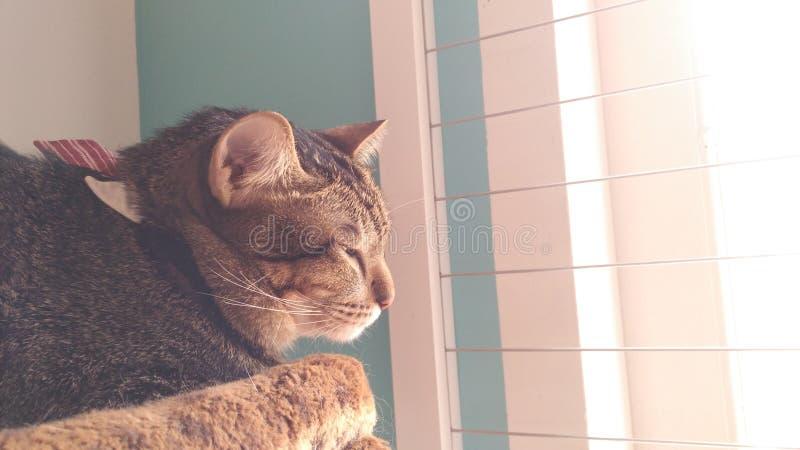 Os gatos têm seu próprio mundo imagem de stock royalty free